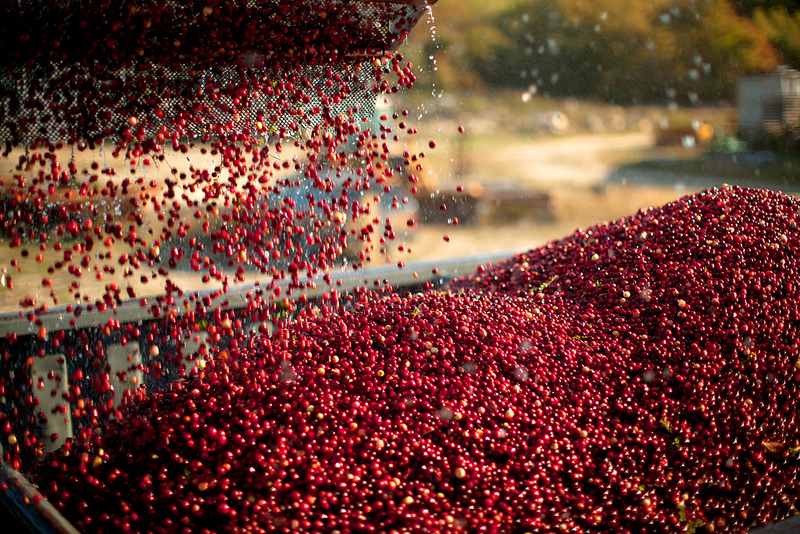 cranberries-being-poured.jpg